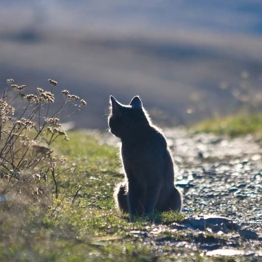 cat looking backwards while sitting on the edge of a path